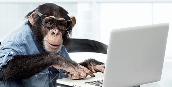 Monkey on Laptop